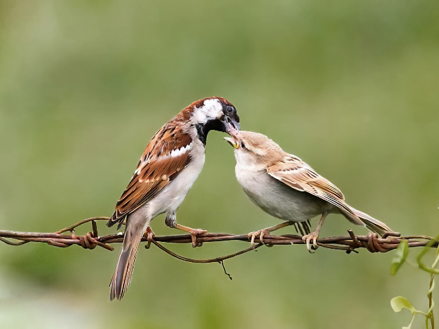 Sparrow-Picture 2