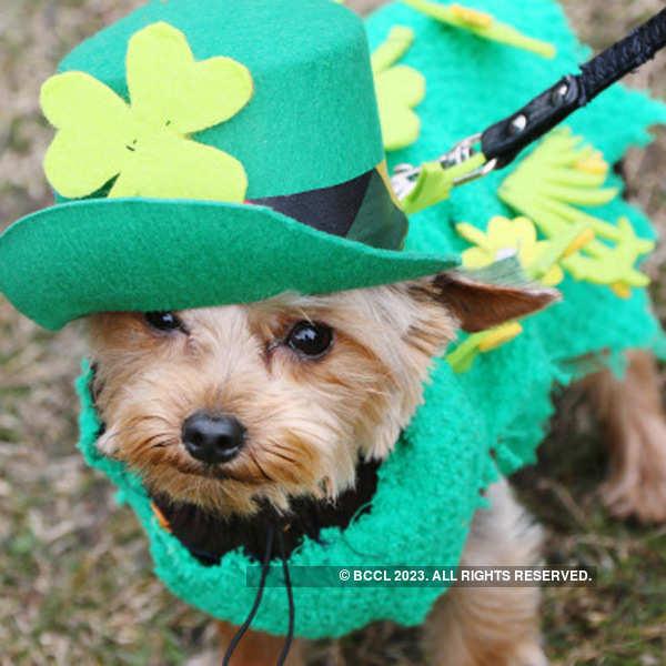 St. Patrick's Day Celebrations