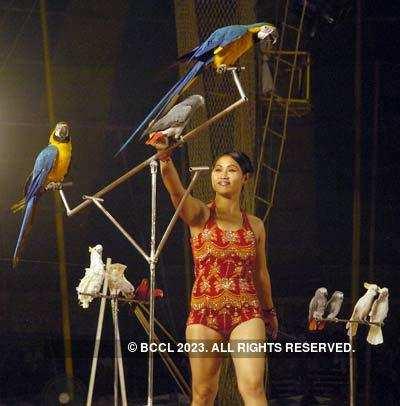 Bombay Circus