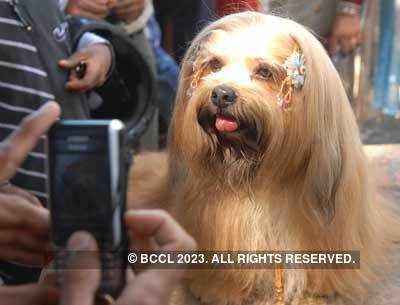 National level dog show