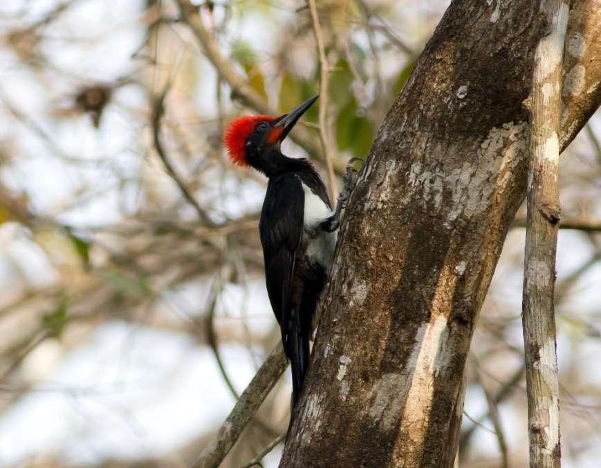 The Cotigao Wildlife Sanctuary