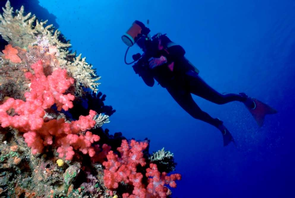 Scuba Diving at the Fiji Islands