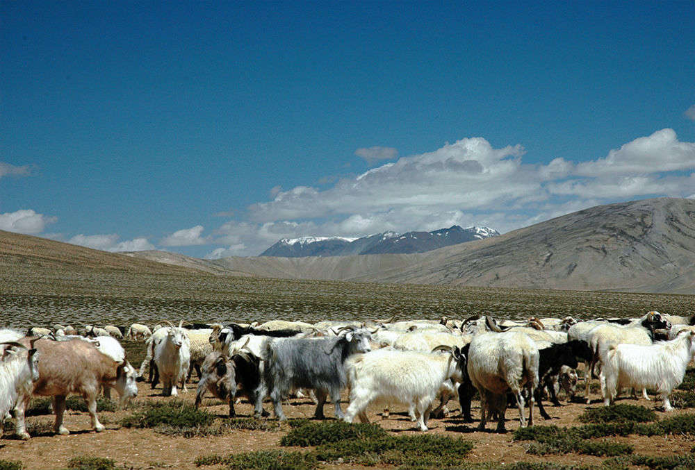 Leh-Manali Route, The Himalayas