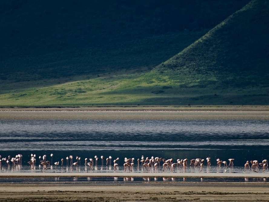 Ngorongoro Crater Wildlife Safari