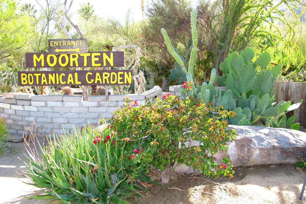 Moorten Botanical Garden In Palm Springs Times Of India Travel