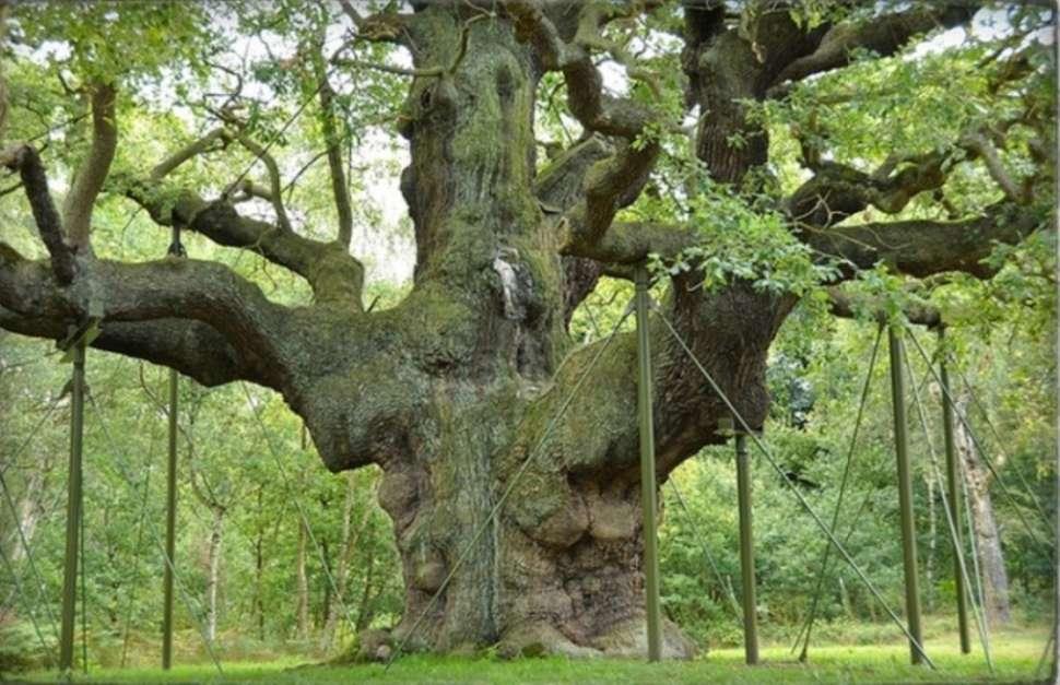 Robin Hood's Sherwood Forest