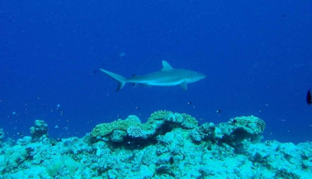 Diving Blue Corner