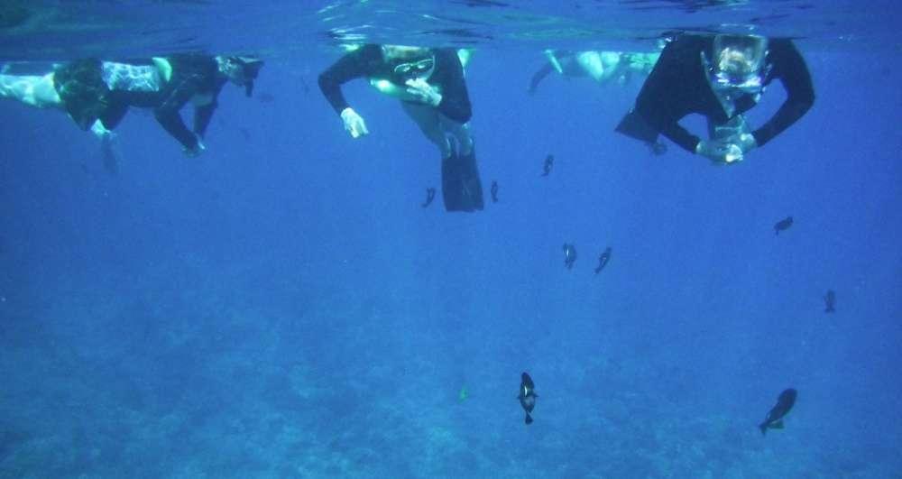 Snorkeling Molokini