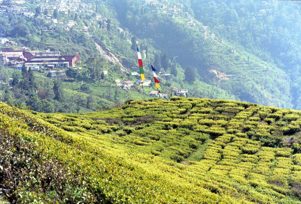 Chamong Tea Estate