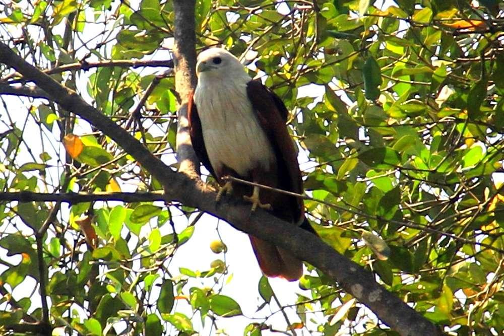 Cotigao Wildlife Sanctuary