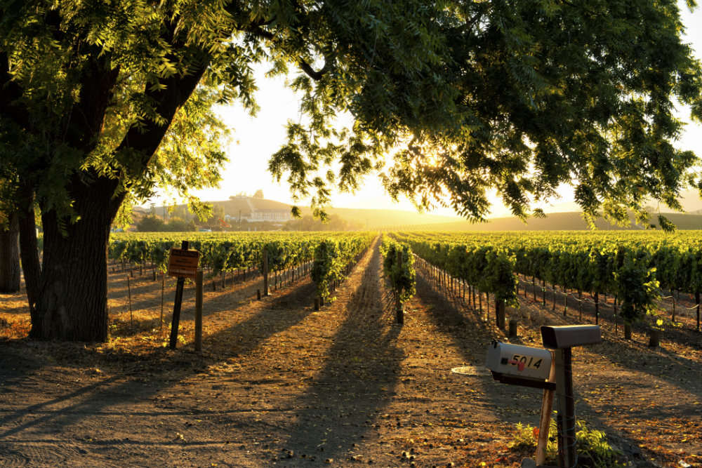 Vallonné Vineyards