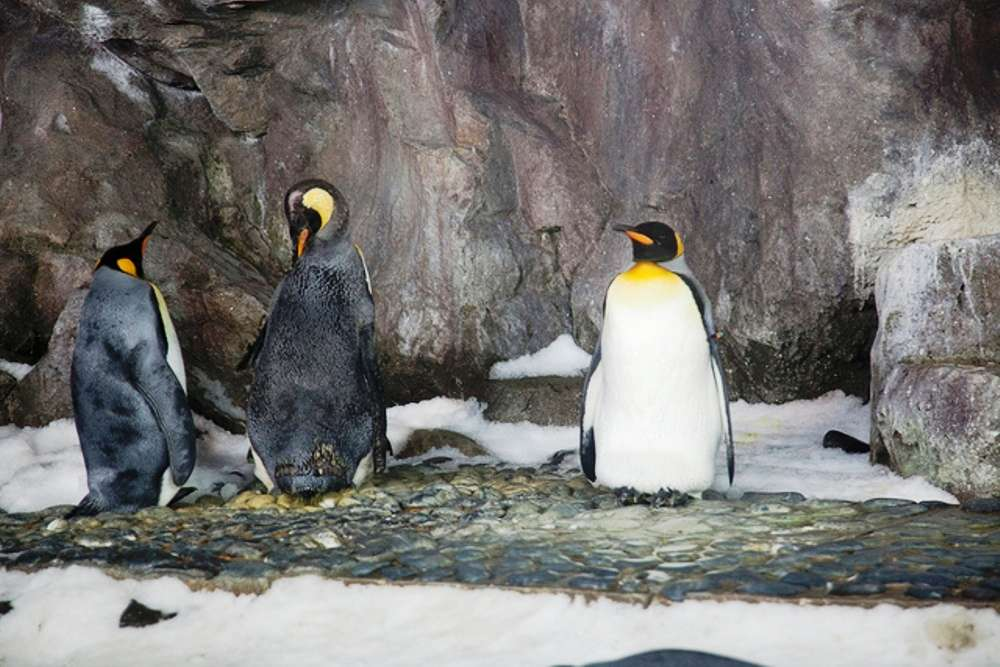 Play with penguins