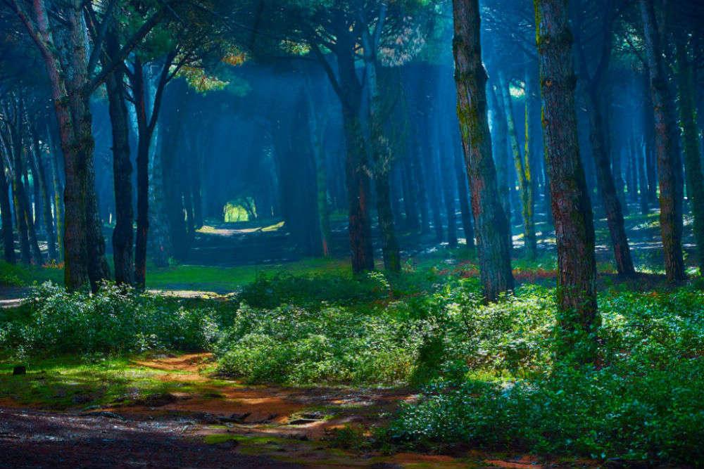 Sapo National Park