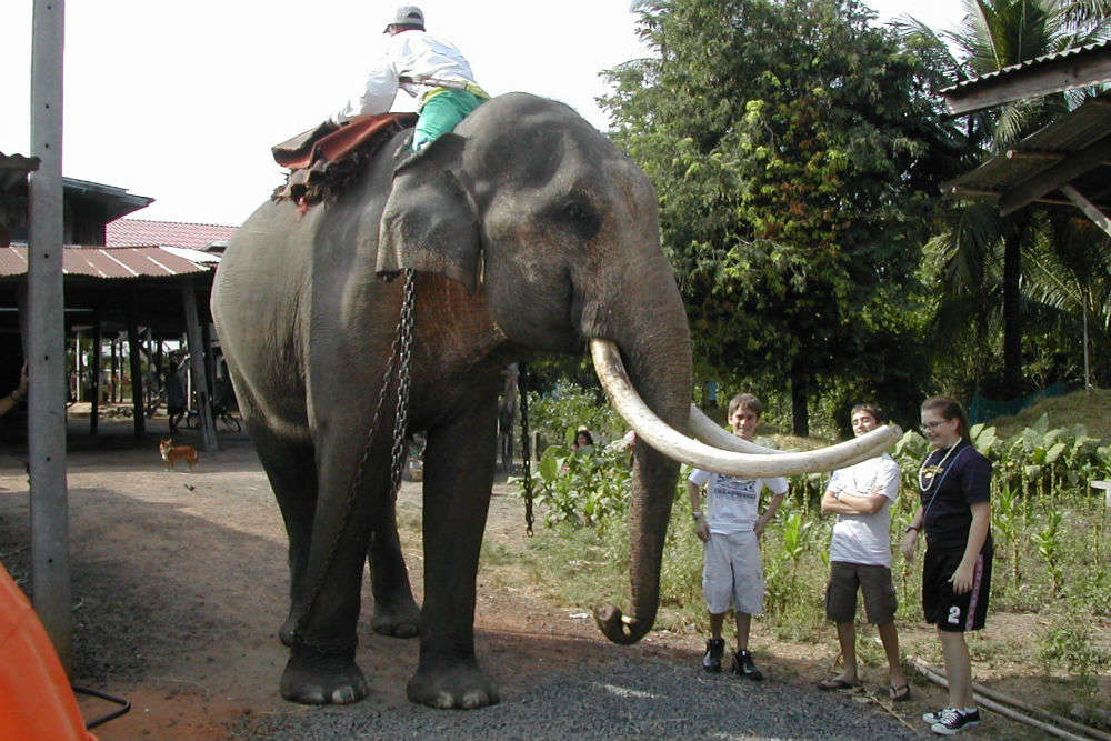 Surin Elephant Round-up