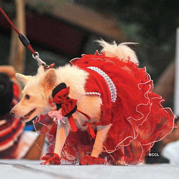 Pet Fed at Dilli Haat