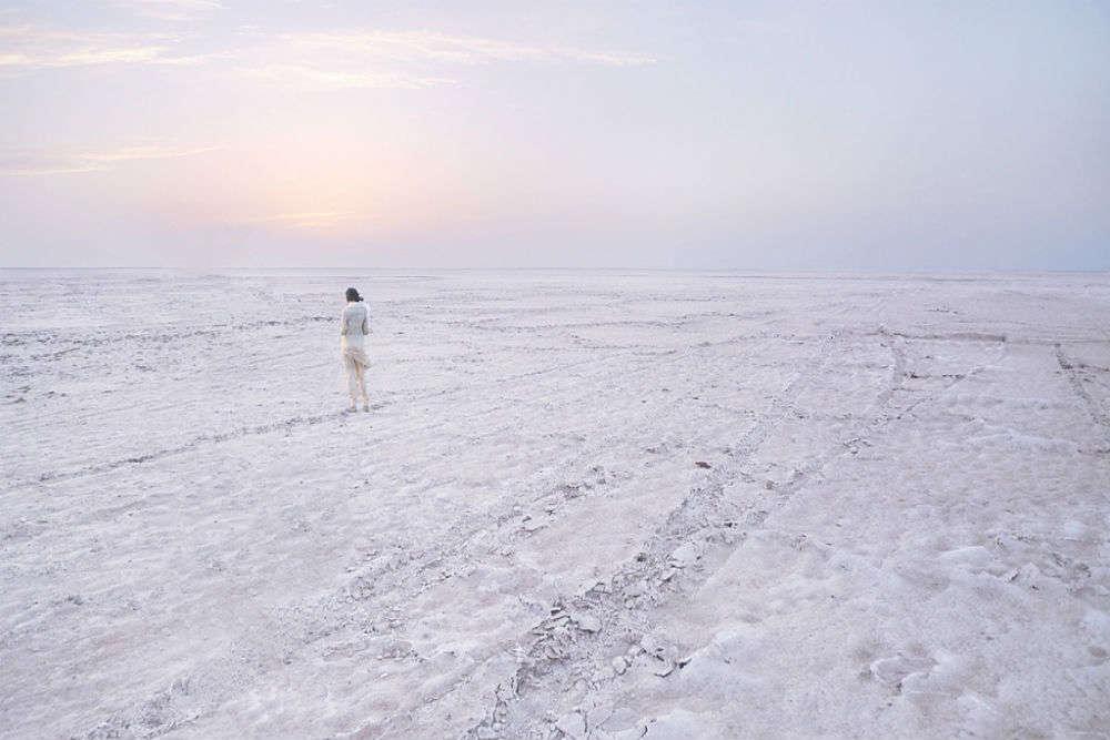 Wildlife of the Gulf of Kutch