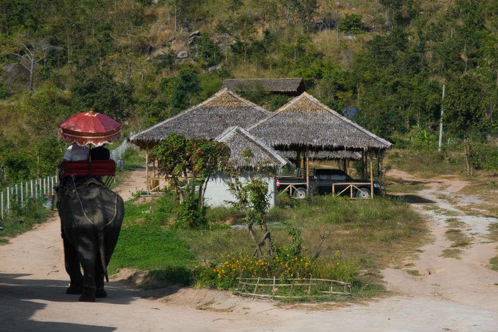Elephant Junction