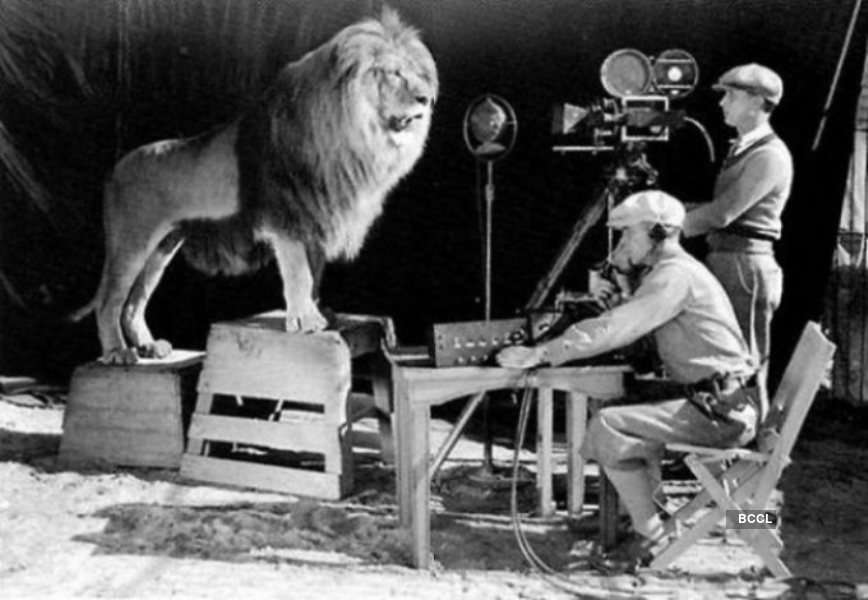 Leo, the Lion at the shoot