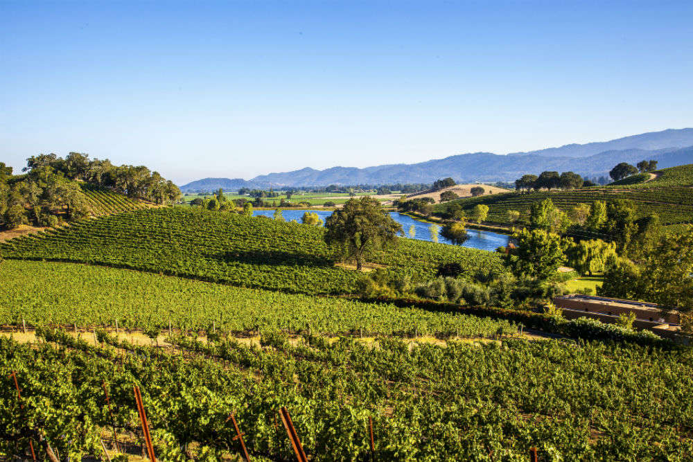 Napa Valley Times Of India Travel