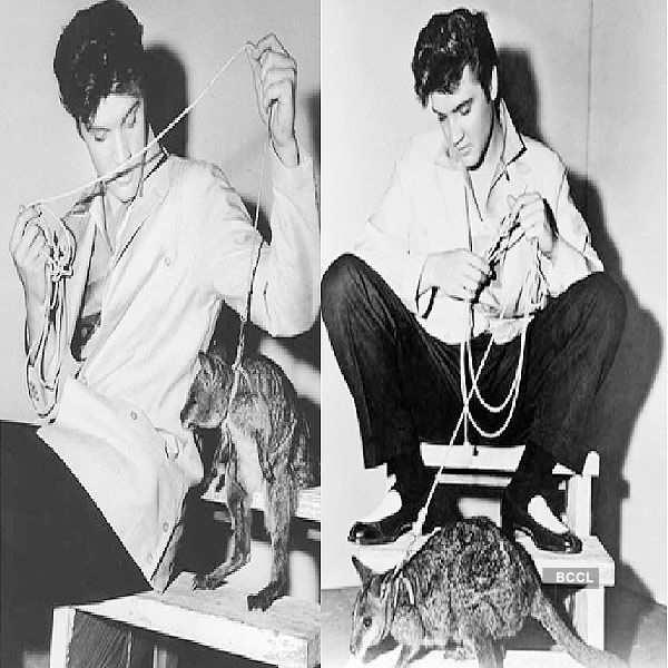 American singer and actor Elvis Presley owned a kangaroo
