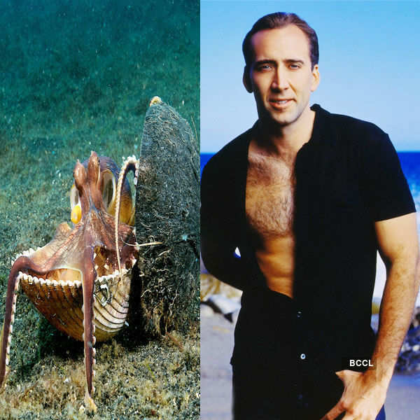 Ghost Rider star Nicolas Cage owns an Octopus