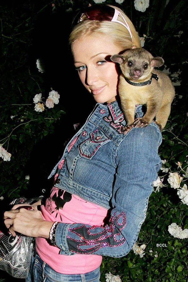 Hotelier Paris Hilton owns a rain-forest mammal Kinkajou