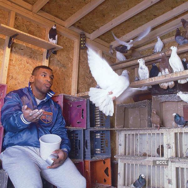 Boxer Mike Tyson even had pet pigeons