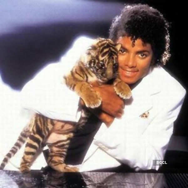 Late King of Pop Michael Jackson had a Bengal tiger