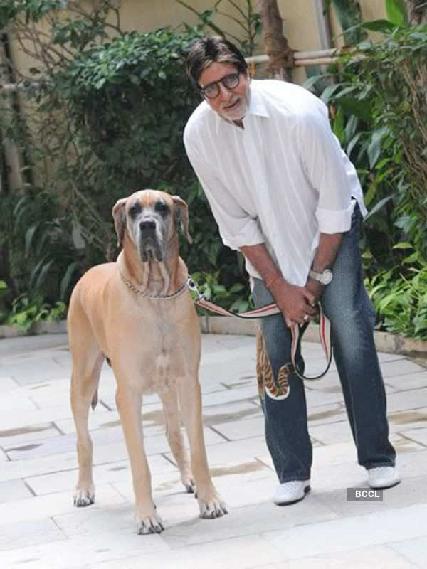 Famous people with their bizarre pets