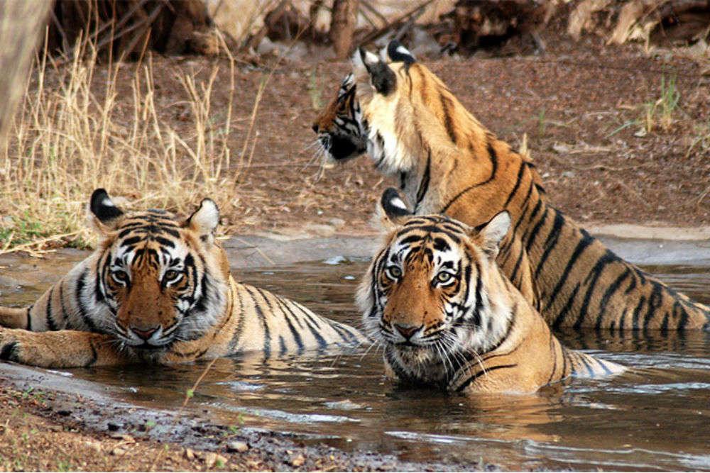 Ushakothi (Badrama) Wildlife Sanctuary