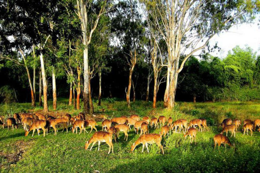 Wildlife sanctuary