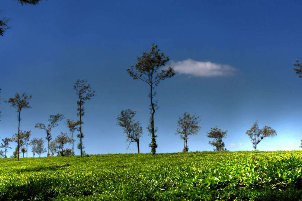 Walk around the coffee plantations - Coorg: Get the Detail ...
