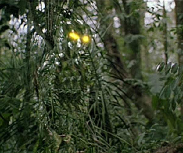 Invisibility Camouflage From Predator Predator 2 And
