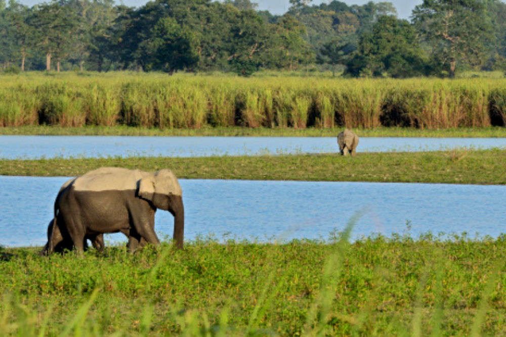 Wild tales from Assam that will freak you out - Part 1