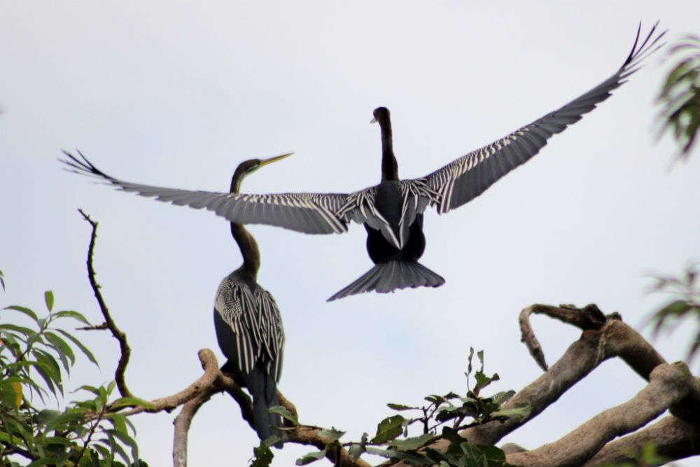 Soor Sarovar Bird Sanctuary - Agra: Get the Detail of Soor