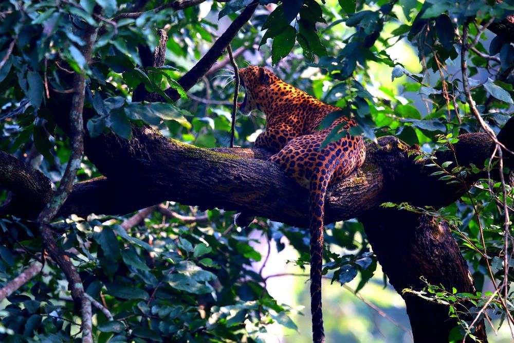 Kabini Wildlife Sanctuary | Kabini National Park | Times of India Travel