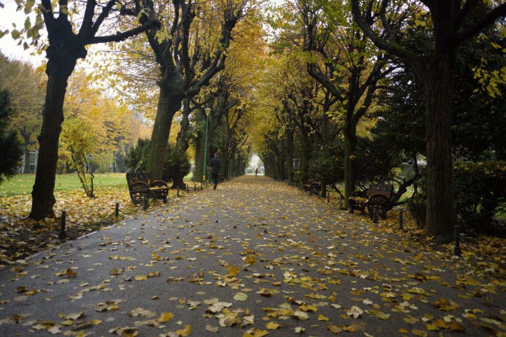 Parks in Bucharest