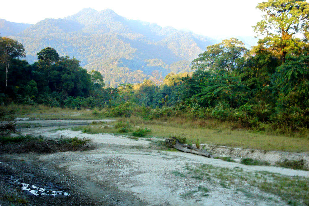 Jungle safari in UNESCO world heritage sites