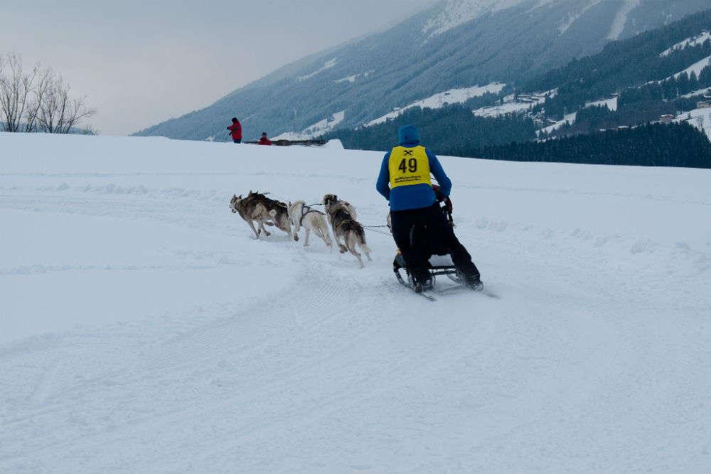 Enjoy dog sledding