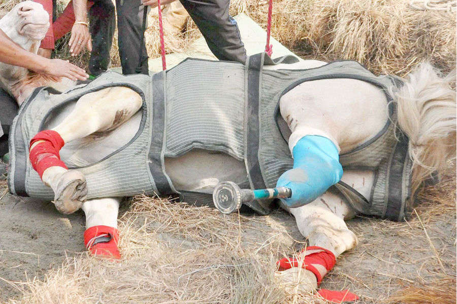 Police horse 'Shaktiman' passes away