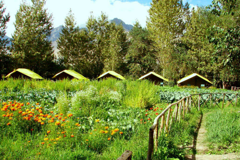 Nubra Organic Retreat