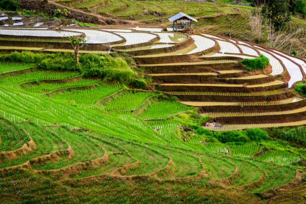 Explore the stunning rice terraces