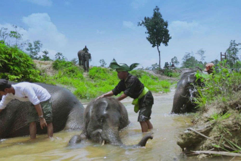 Tesso Nilo National Park, Riau, Sumatra