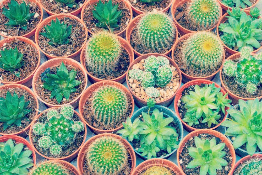 Explore cactus and flower nurseries