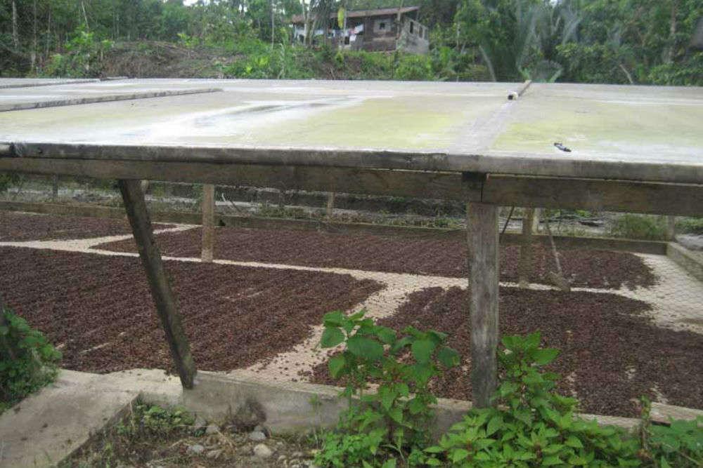 Chocolate farms of Ecuador