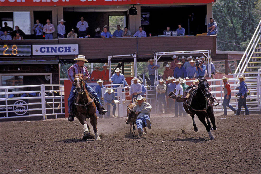 Attend the rodeo