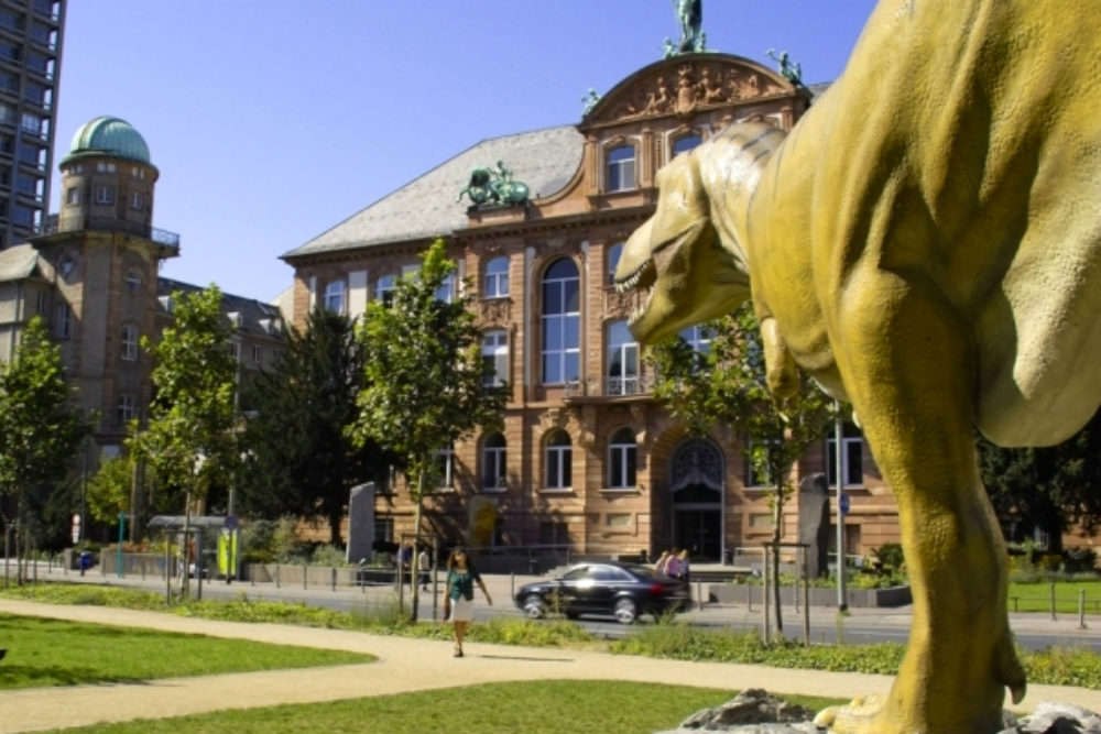 The Senckenberg Museum of Natural History