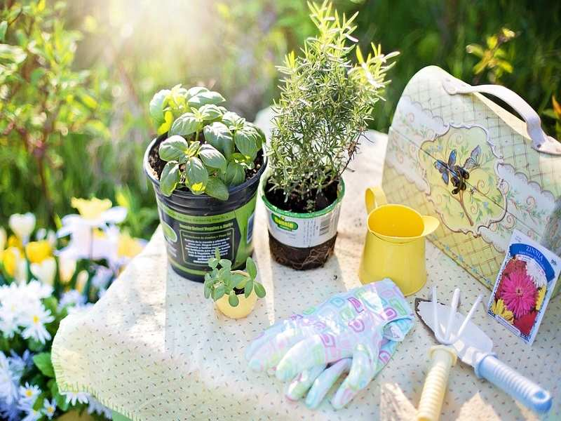 Beginners Guide To Kitchen Garden The Times Of India