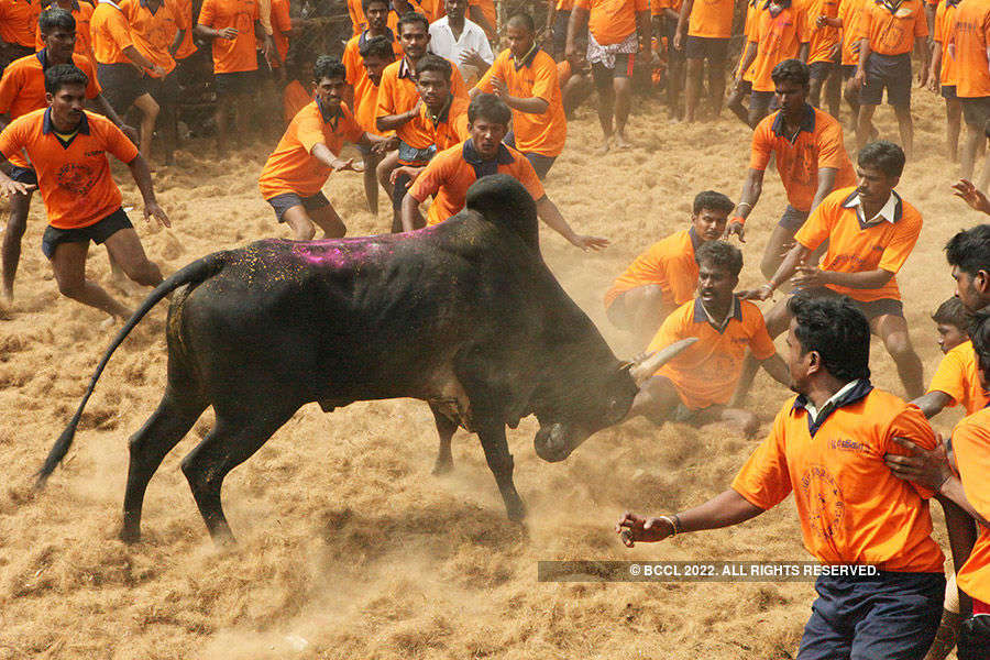 Jallikattu protests gain strength in TN