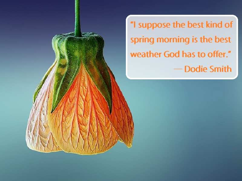 Beautiful Spring Quotes From Literature The Times Of India